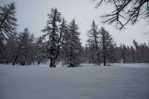 ....aber im Lerchenwald oben schon richtig dick!